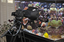 The LENSKIRT works great for taking pictures through aquarium glass.