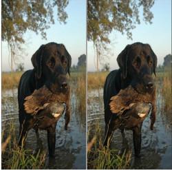 Duck Hunting Cornhole Wraps