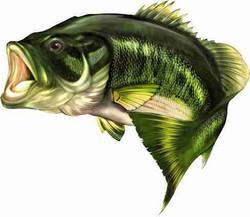 Bass Cornhole Decals