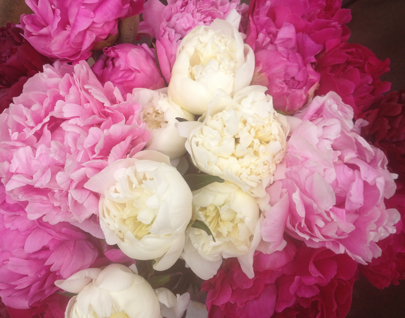 Fresh cut peonies pre order special flyboy naturals llc call today for details on how to reserve your stunning peony flowers or pre book on our site izmirmasajfo Images