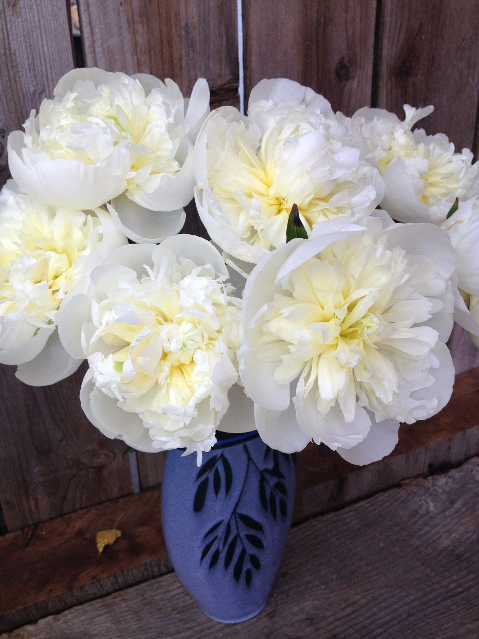 Peoniesoniesonies flyboy naturals llc we have 6000 peony bushes that produce many gorgeous bloomswe offer them as fresh cut flowers and mightylinksfo