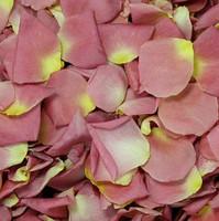 Alluring Pink Petals