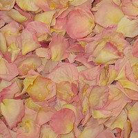 """BB"" Pink Preserved Freeze Dried Rose Petals"