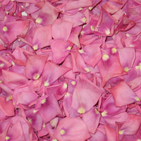 Bright Pink Preserved Freeze Dried Rose Petals