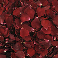 Deep Red / Showbiz Preserved Freeze Dried Rose Petals