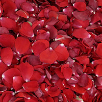 Bridal Red Preserved Freeze Dried Rose Petals