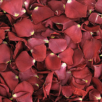 Hot-N-Spicy Preserved Freeze Dried Rose Petals
