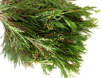 Incense Cedar Christmas Greens 20 lbs. Boughs