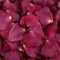 Fame Preserved Freeze Dried Rose Petals