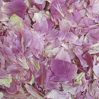 """BB"" Mauve Peony Preserved Freeze Dried Petals"