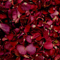 """BB"" Wedding Reds Preserved Freeze Dried Rose Petals"