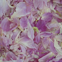 """BB"" Peony Preserved Freeze Dried Petals"