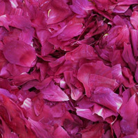 Deep Fuchsia Preserved Freeze Dried Peony Petals