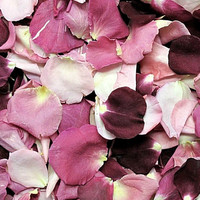 Endless Love Preserved Freeze Dried Rose Petals Blend