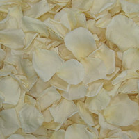 Bridal White/Ivory Preserved Freeze-dried Rose Petals-Fragrant