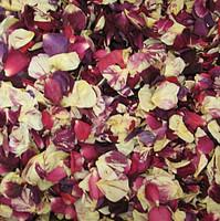 """BB"" Kara's Blend Preserved Freeze Dried Rose Petals"