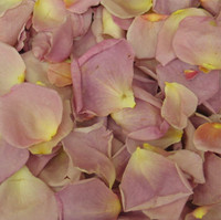 Pink Heather Preserved Freeze Dried Rose Petals