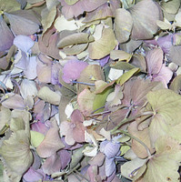 Assorted Preserved Freeze Dried Large Hydrangea Petals