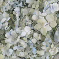 Hydrangea Petals Snowdrop