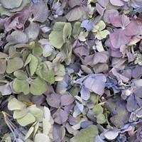 Lavender-Green Preserved Freeze Dried Hydrangea Petals LTD EDITION