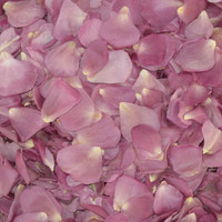 Lavender-Simply Marvelous Preserved Freeze Dried Rose Petals