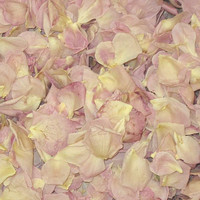 """BB Belindas Pink Preserved Freeze Dried Rose Petals"