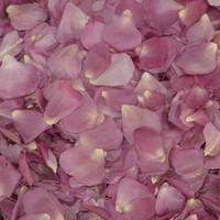 LAVENDER Preserved Freeze Dried Rose Petals
