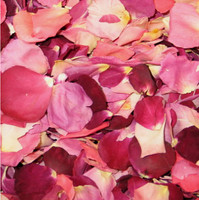Very Berry Preserved Freeze Dried Rose Petals Fragrant