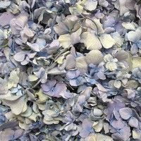 Pastel Preserved Freeze Dried Hydrangea Petals
