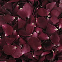 Glad Tidings Preserved Freeze Dried Rose Petals