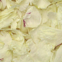 Winter White/Wine Peony Petals