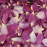 Love Affair Preserved Freeze Dried Rose Petals