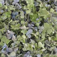 4 Hydrangea Preserved Freeze Dried Hydrangea Petals
