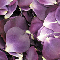 Passionate Purple Preserved Freeze Dried Rose Petals
