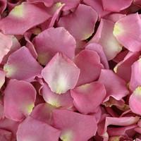 Sarah Preserved Freeze Dried Rose Petals