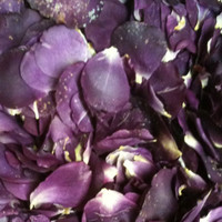 """BB"" Imperfect Wild PurplePassion Preserved Freeze Dried Rose Petals"