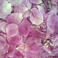 Light Fuchsia Preserved Freeze Dried Peony Petals