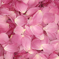 Simplicity Bright Pink Preserved Freeze Dried Rose Petals
