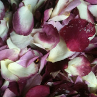 """BB"" Very Berry Preserved Freeze Dried Rose Petals Blend"