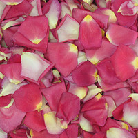 Tango Preserved Freeze Dried Rose Petals
