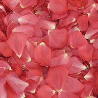 Passionate Pink Preserved Freeze Dried Rose Petals