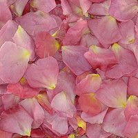 Kiss Me Quick Preserved Freeze Dried Rose Petals