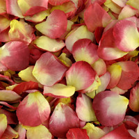 Tuscan Sun Preserved Freeze Dried Rose Petals