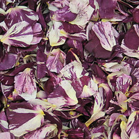 LUCKY IN LOVE Preserved Freeze Dried Rose Petals RPScentLuckLove