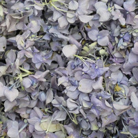 Periwinkle Preserved Freeze Dried Hydrangea Petals LTD Edition