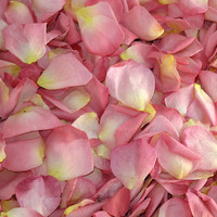Enchanting BillW Preserved Freeze Dried Rose Petals