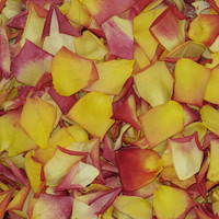 Confetti Rose Preserved Freeze Dried Rose Petals