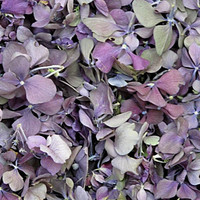 Royal Preserved Freeze Dried Hydrangea Petals LTD EDITION