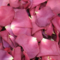 Super Nova Preserved Freeze Dried Rose Petals