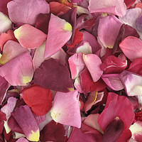 Very Berry Blend Preserved Freeze Dried Rose Petals